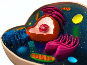Cross-section of animal cell