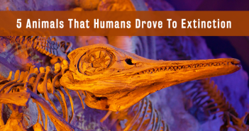 5 Animals That Humans Drove To Extinction