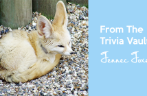 From_the_trivia_vault_Fennec_Foxes