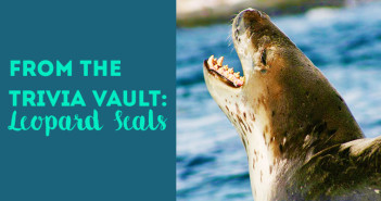 from_the_trivia_vault_leopard_seals